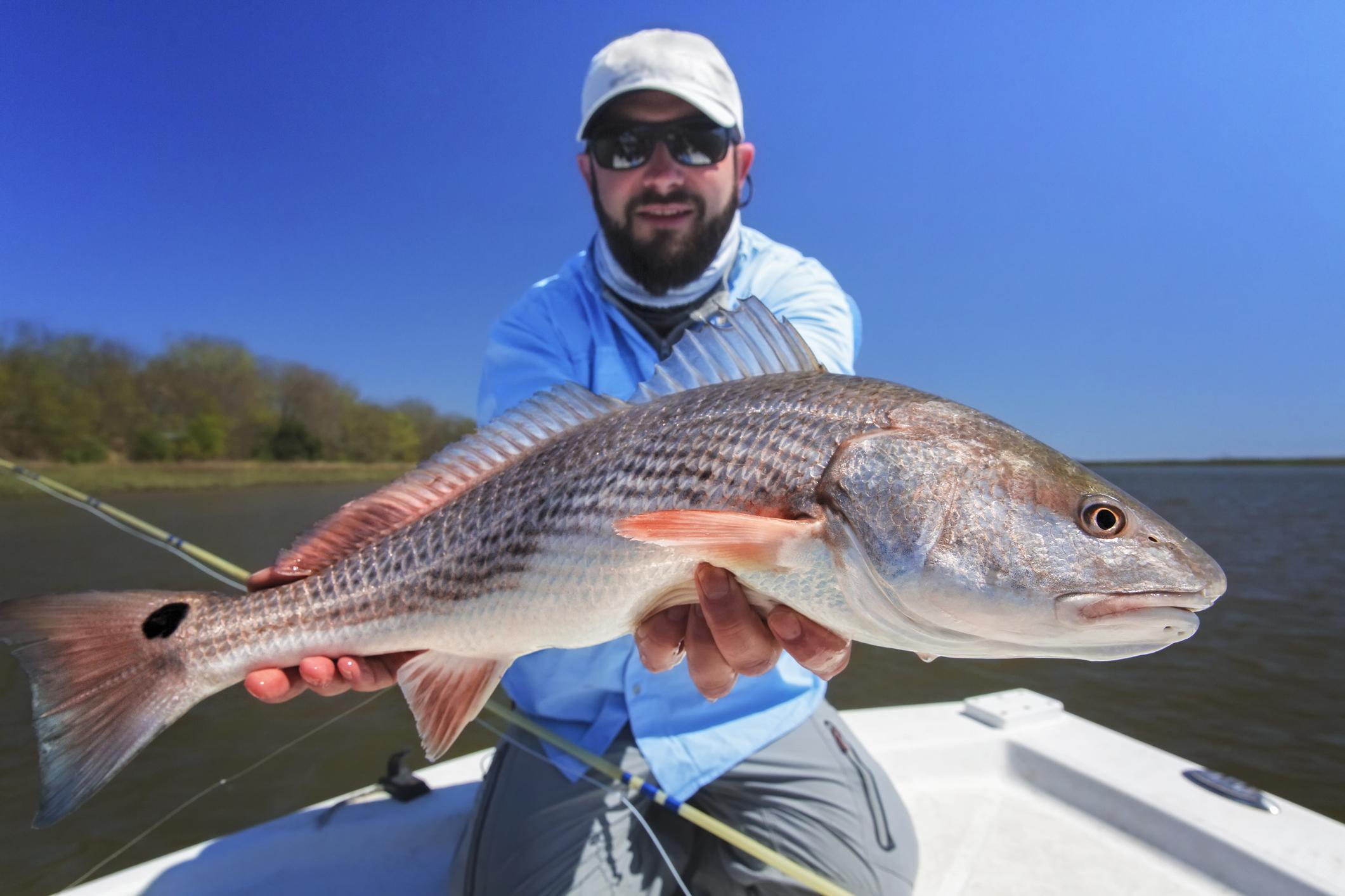 Rovfisker  i  havet