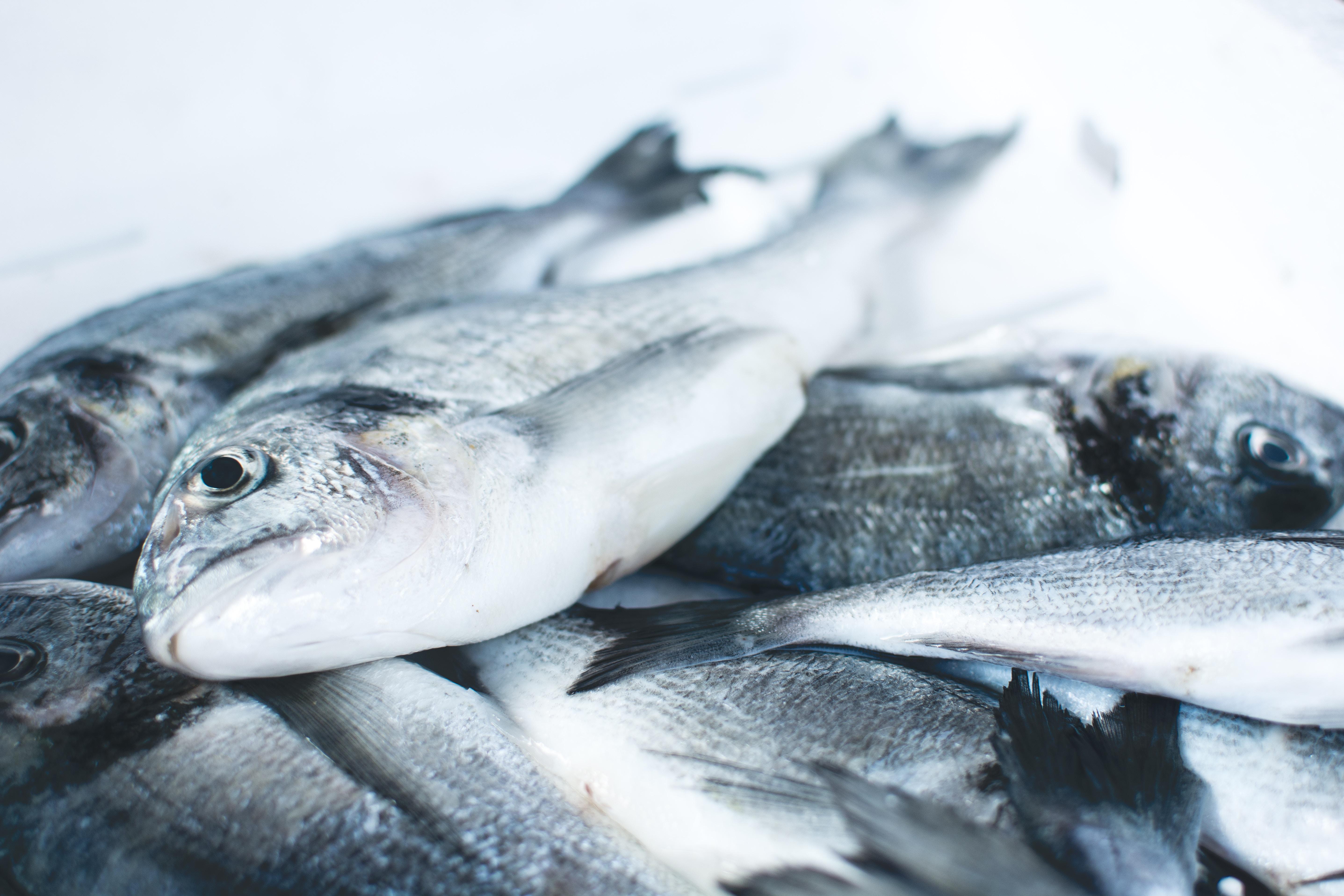 Tall  om  fiskeopdrett