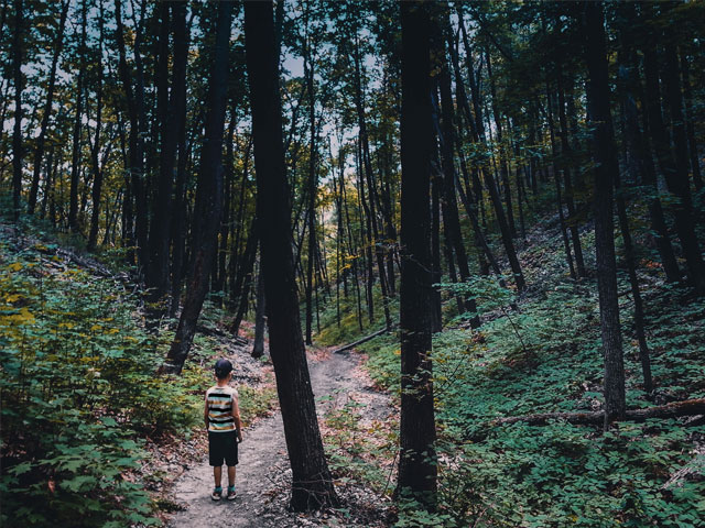 Nysgjerrig gutt ute i skogen